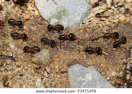 groups of termites transporting food