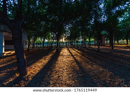 Grove in an urban park at sunset with the sun low.