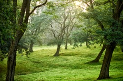 Grove in the park Artxanda Bilbao, Basque Country, Spain