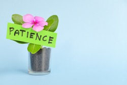 Grow and nurture patience concept. Plant on pot with flower on blue background with copy space.
