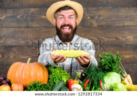 Grow organic crops. Community gardens and farms. Healthy lifestyle. Farmer hold corncob or maize wooden background. Farmer presenting organic homegrown vegetables. Homegrown organic harvest benefits.