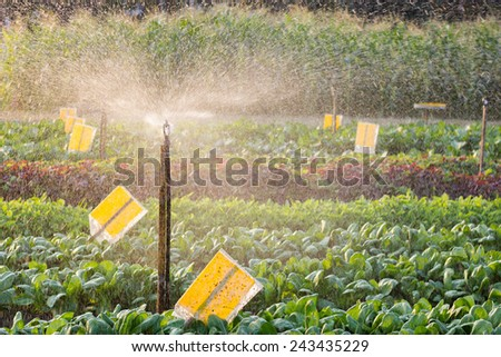 growed organic vegetables in watering for health and the environment. Make a difference The combination of agriculture in the city.