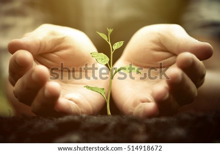 Growing a tree. Hands holding and nurturing a green plant growing on fertile soil with warm sunlight / Protect nature