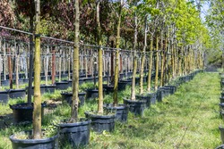 Growing and cultivation trees and plants in pots