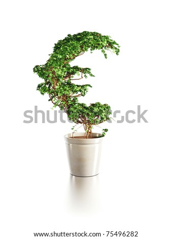 growing euro tree isolated 3d render