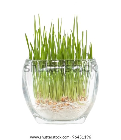 Growing grass concept in glass pot - stock photo