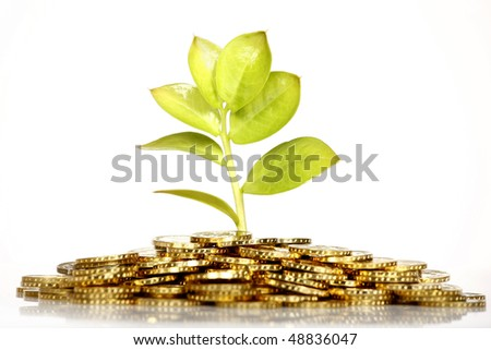 Growing green fresh leaf from gold coins
