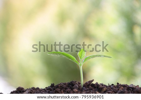 Growing green plant  #795936901