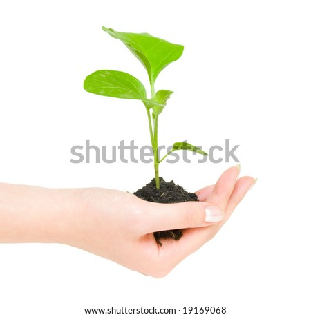 Growing green plant in a hand isolated on white background