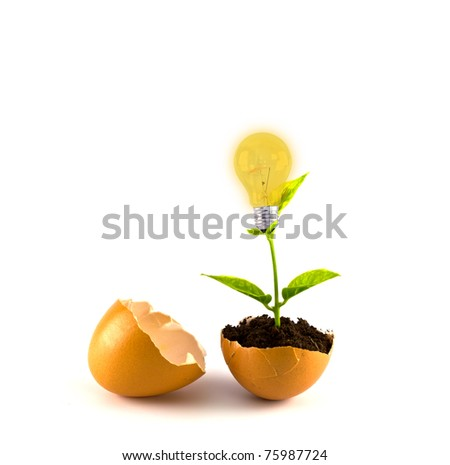 Growing green plant in egg shell and light bulb