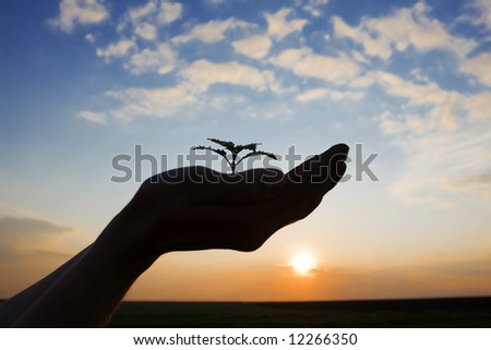 growing green plant in the hand of a farmer against beautiful sky at sunset