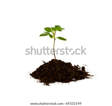 Growing green plant isolated on white background.