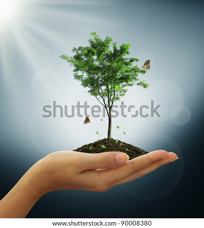 Growing green tree plant in a hand, butterfly