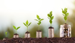 Growing Money - Plant On Coins - Finance growth And Investment Concept