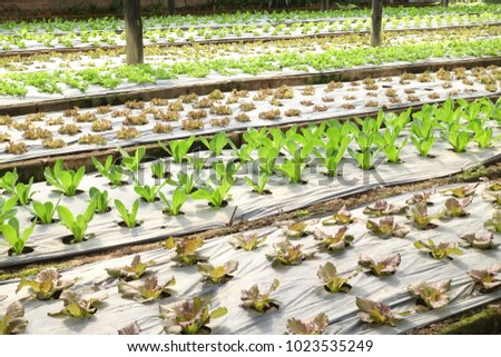 Growing organic vegetable farms for background #1023535249