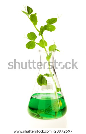 Growing plant in laboratory with nutrition liquid