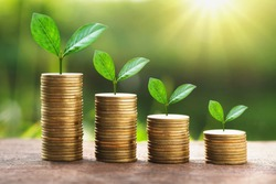 growing plant on stack money with sunshine. business finance concept