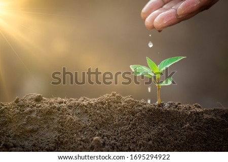 Growing plant with drops water on young tree. Sustainable environment concept. Helping and protecting world from global warming. stock photo