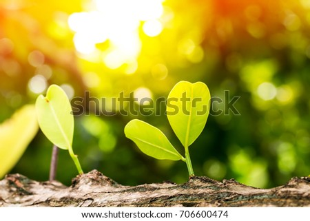 Growing plants growing in sunlight on bokeh nature background. #706600474