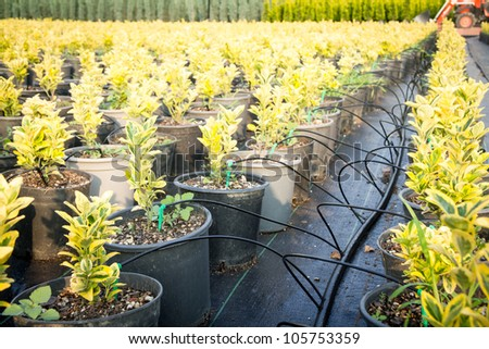 Growing plants in a row and cultivation tubes around them.