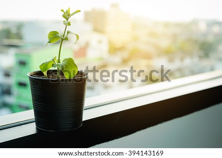 growing plants in little black jardiniere at window in morning with sunlight