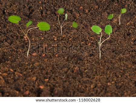 Growing saplings