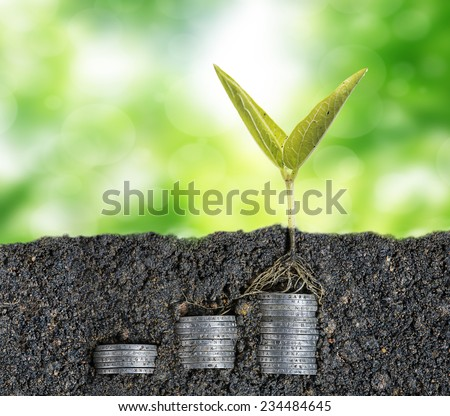 Growing seed with stacked coin-investment plan concept