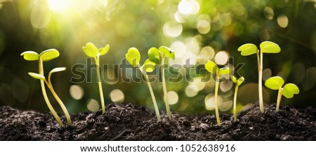 Growing Seeds on Natural Sunny Background. Agriculture. Plant seedling #1052638916