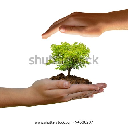 growing tree in hand