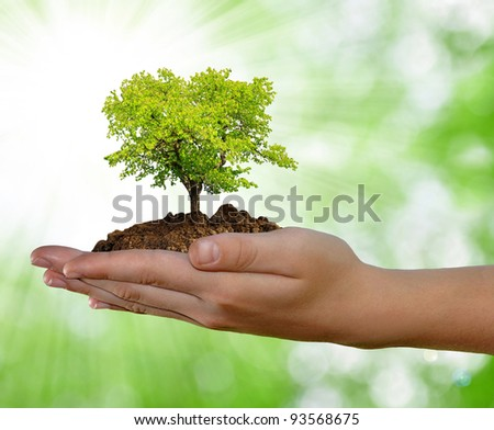 growing tree in hand on green background