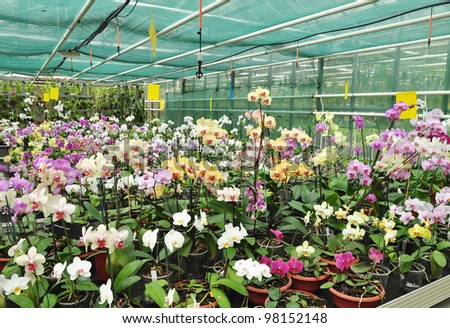 Growing tropical orchid plants in greenhouse. Floral garden.