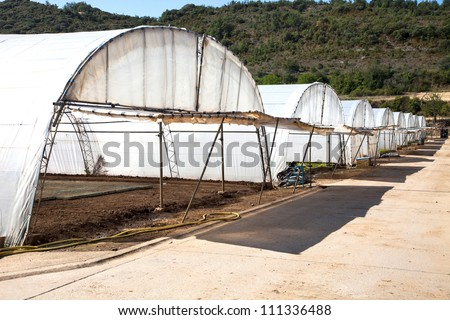 Growing vegetables in plastic greenhouses