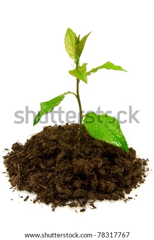 growing young green plant on white background. - stock photo