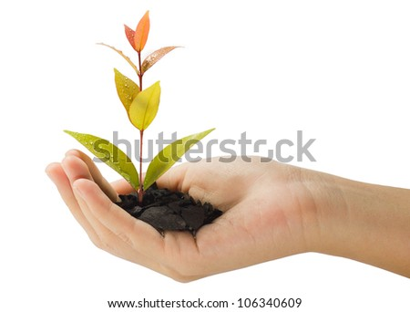 growing young plant in a hand