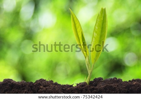 growth concept witch young plant and green bokeh copyspace