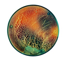 Growth of fungi that decompose plastic for recycling in a petri dish