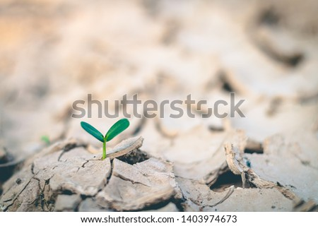 Growth of trees in drought, Living with tree drought.
