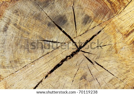Growth ring of wood, can be used as background