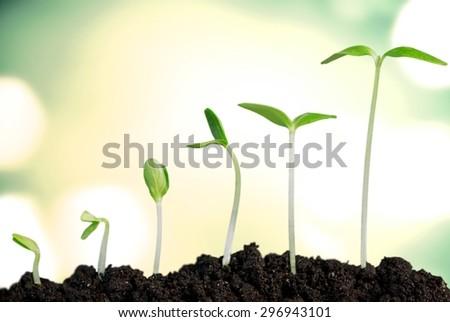 Growth, Seedling, Plant.