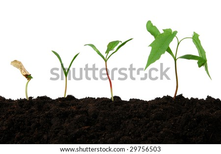 Growth stages of a small tree - stock photo