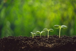 Growth Trees concept seedlings nature background Beautiful green
