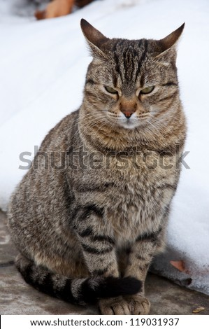 grumpy cat in the snow