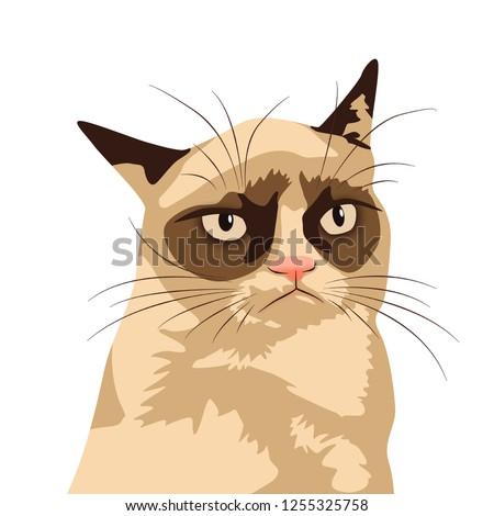 Grumpy cat meme. Isolate White background.