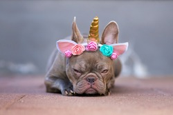 Grumpy French Bulldog dog with angry facial expression dressed up as unicorn wearing headband with  flowers and horn, lying flat on ground
