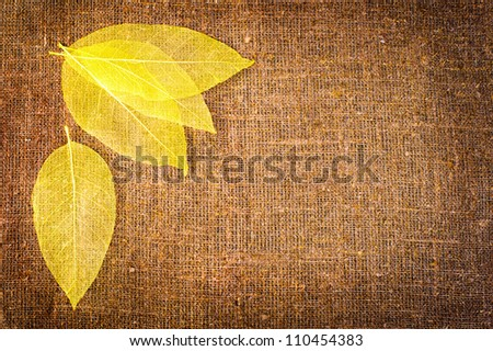Grunge autumn background with dried leaves isolated on canvas