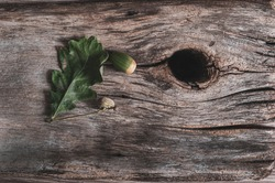 Grunge background. green oak leaves and acorn on very old cracked boards, wood darkened by age and weathering, wood texture close-up, horizontal photo.