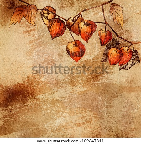Grunge background with a sketch of orange physalis