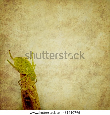 grunge background with cricket, and with space for text or image - stock photo