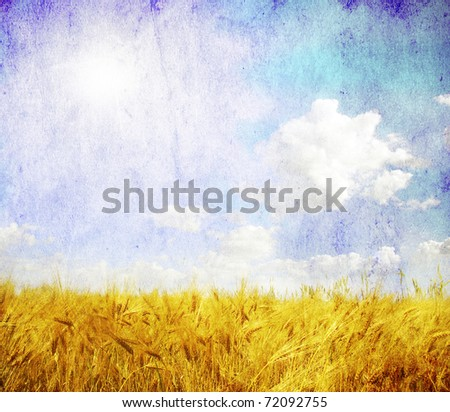 Grunge background with golden wheat in a farm field