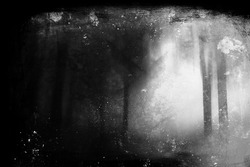 Grunge dark forest wallpaper, abstract nature background
